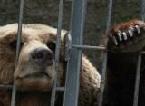 Finally, there's hope for Albanian captive bears