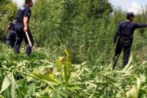 EC: Albania's narcotics business generates €260 mln annually