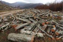 Logging endangers Albania's remaining handful of Balkan lynx, watchdog warns