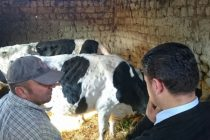Lumpy skin disease increases poverty rates among affected farmers