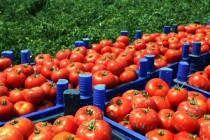 Albania, Macedonia engage in new trade war over fresh vegetables' blockade