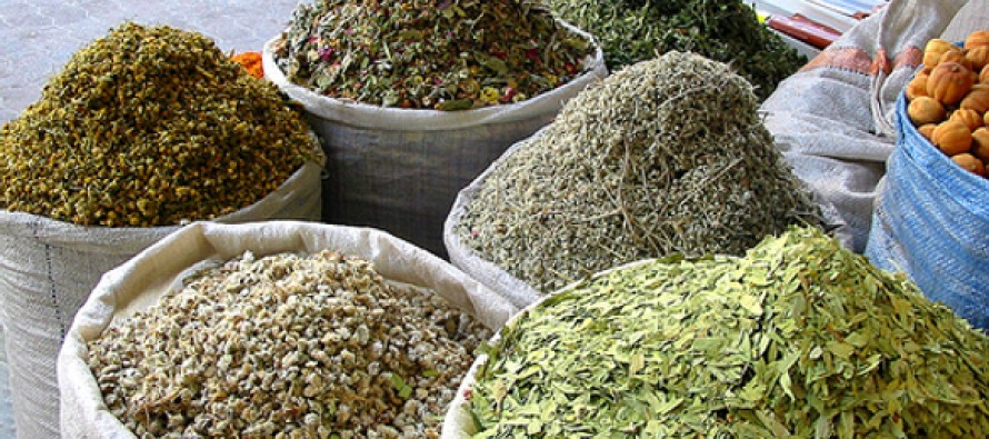 Upward trend in exports of medicinal plants comes to an end