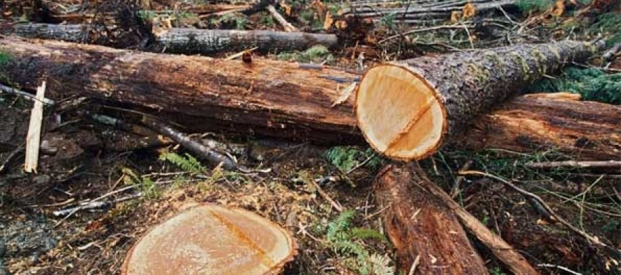 Environmental experts warn forest degradation is worsening with lack of legal framework