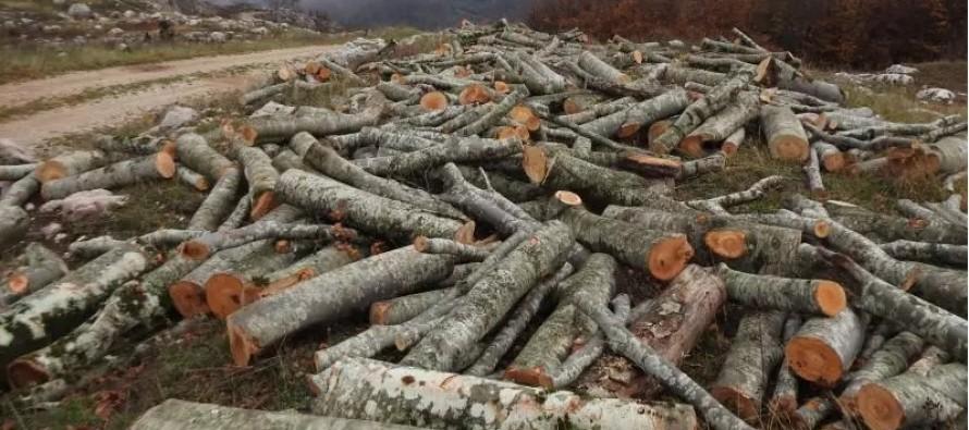 Logging ban hits wood industry as exports drop, imports increase