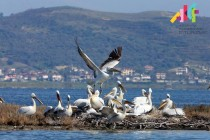 Environmentalists slam Kosovo billionaire's national park development project as dangerous
