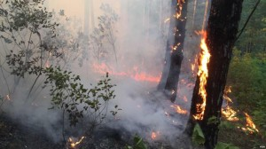 Wildfires are not new in Albania, causing considerable damage to the country's economy and the environment every year. (Photo: Archives)