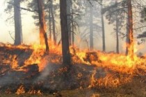 Trial by fire for Albania as wildfires rage