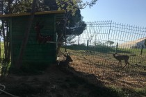 Pictures show roe deer, tortoise held in captivity in downtown Tirana