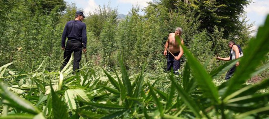 The war against drugs remains a big challenge for Albania, independent analysts say