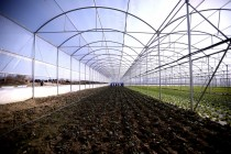 More Albanian agricultural products tapping European markets