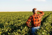 Agricultural employment shrinks