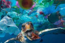 Plastic waste and fishermen threaten the survival of sea turtles