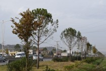 Contracts for tree sowing in Tirana under investigation