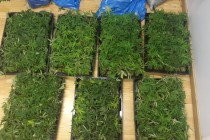 Police arrest state officers tied to marijuana cultivation in Fier