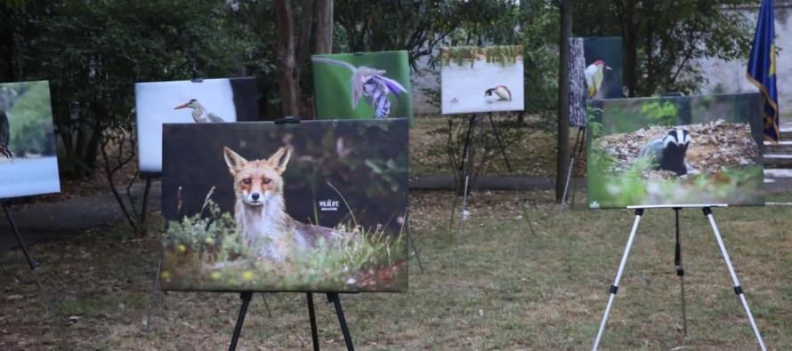 "Kosovo Embassy exhibits ""Albanian Wildlife"""