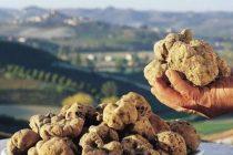 Rare fungi growing in Albania valued at 3000 euros per kilogram