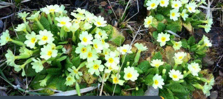 Spring in Kolonja, South East Albania