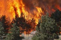 Southern Albania forests engulfed in flames